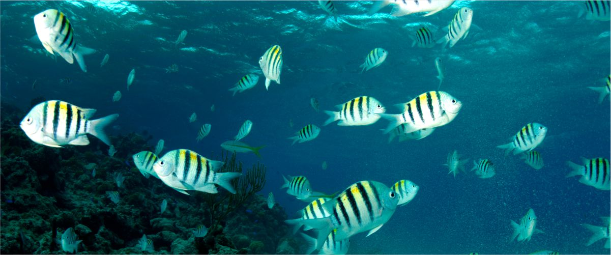 low_vision_specialists_zebra_fish_eyes